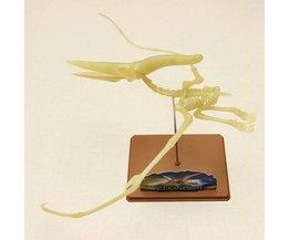Lichtgevende Pteranodon Skelet