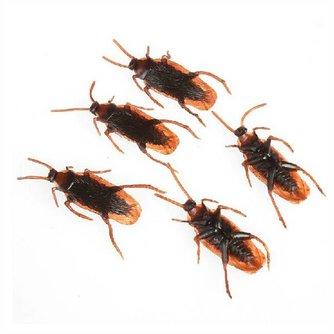 Nep Kakkerlakken 10 Stuks