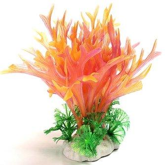 Koraal Aquarium