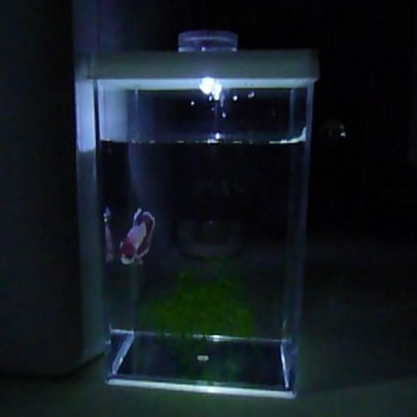 Kleine Aquarium I MyXLshop (SuperTip)