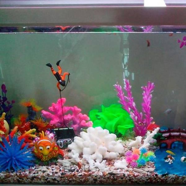 Aquarium decoratie duiker kopen i myxlshop tip for Decoratie aquarium