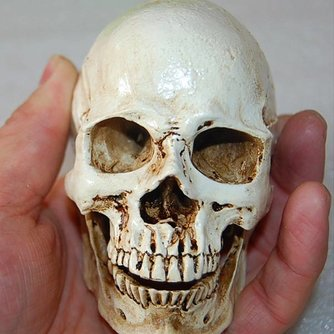Halloween Schedel Van Een Mens