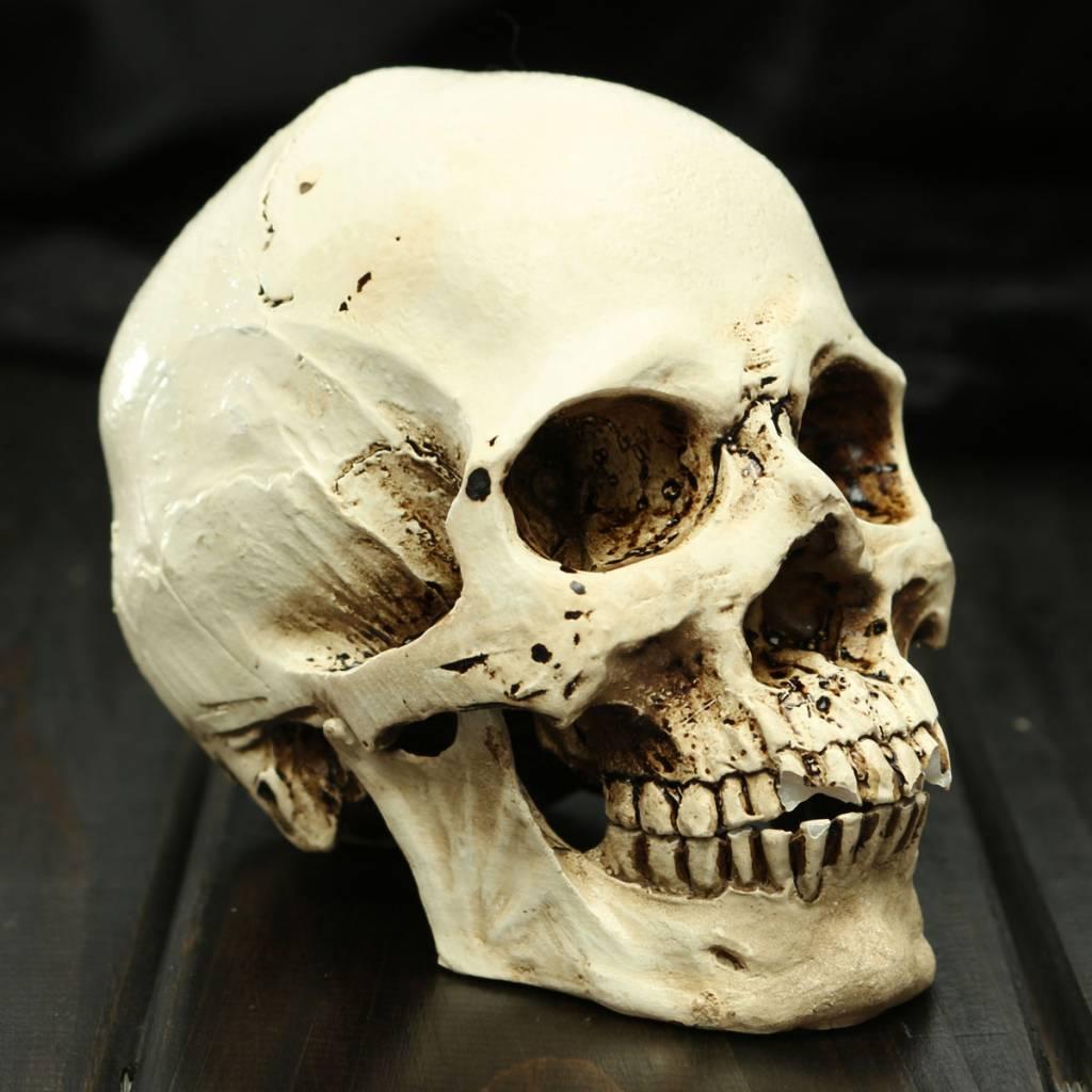 skelet kopen
