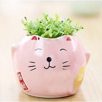 Kat Plantenpot met Plantje