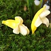 Miniatuurtjes Banaan