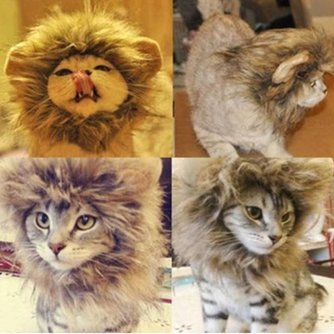Leeuwenmanen voor de Kat of Hond (XS)