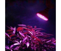 Groeilamp Voor Planten