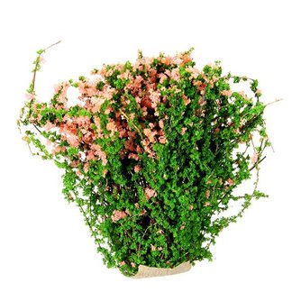 Kleine Kunstplanten In Twee Kleuren