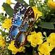 Vlinder Koelkastmagneten 10 Stuks