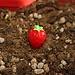 Aardbeien voor Decoratie (5 Stuks)