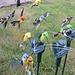 Vogel voor Tuindecoratie