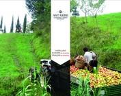Baskenland: Astarbe