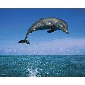 Springend Dolfijn - Mini Poster