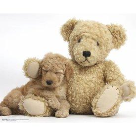 Golden Doodle Puppy Sleeping on Teddy Bear - Mini Poster