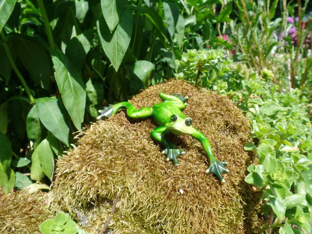 Zierlicher Frosch , klein, liegend