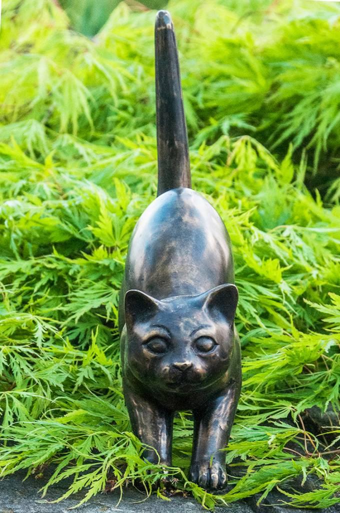 Katze auf der Pirsch