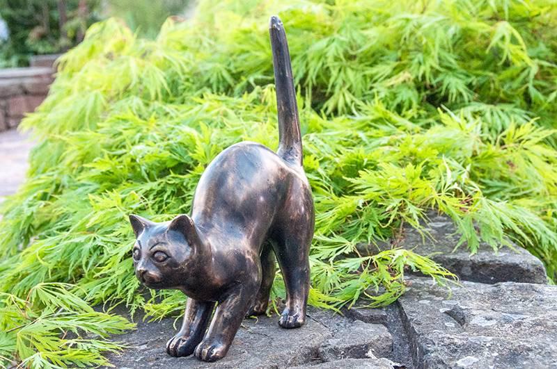 Katze  Funny auf der Pirsch