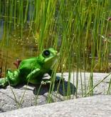 Frosch, grün