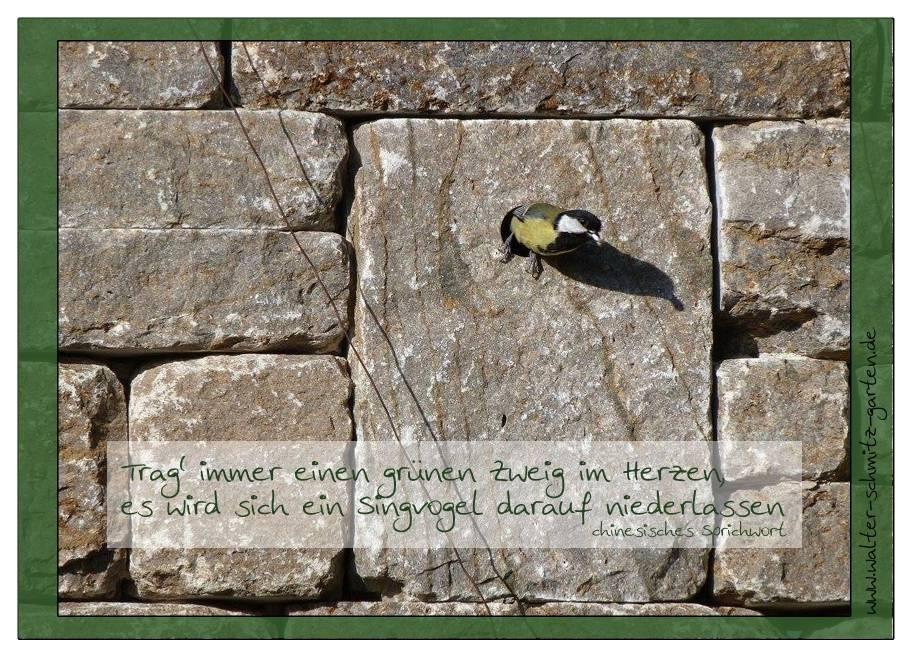 """Postkarte """"Trag immer einen grünen Zweig im Herzen"""""""