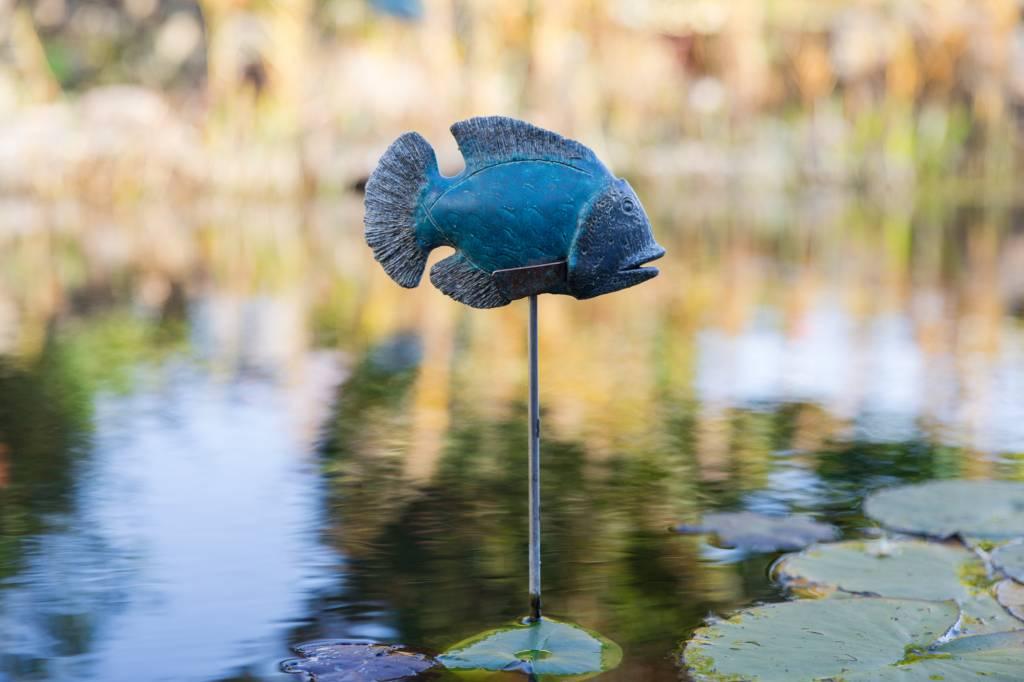 Fisch Melchior
