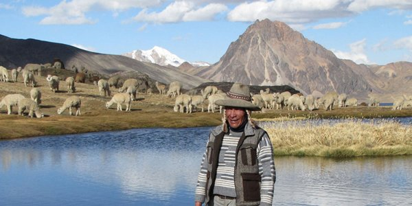 Fairtrade alpacawol uit de Andes