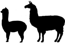 Alpaca vs Llama - black and white