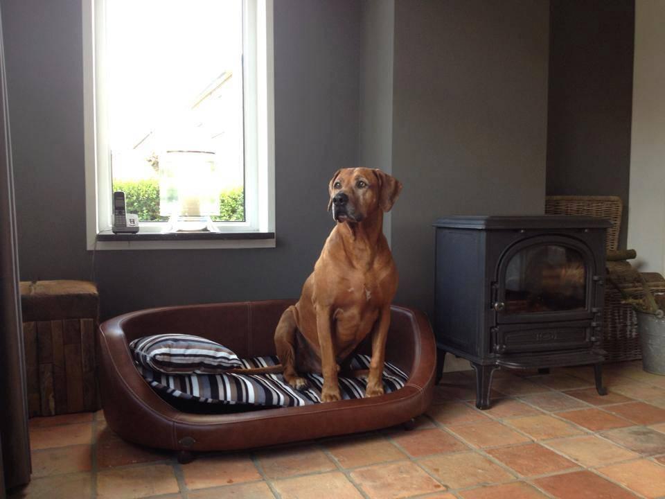 Chester & Wells Oxford II Hondenbank large bruin