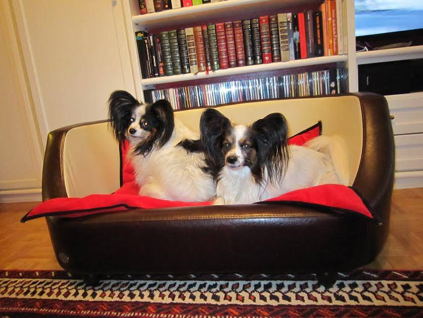 Chester & Wells Oxford Hundecouch braun large