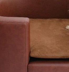 Almohadas perro de reemplazo Hampton tamaño pequeño marrón