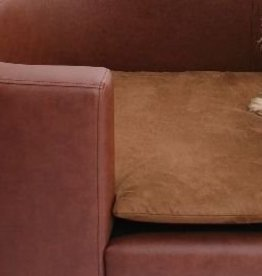 Almohadas perro de reemplazo Hampton tamaño large marrón