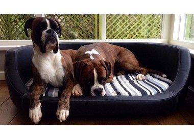 Canapés pour chiens