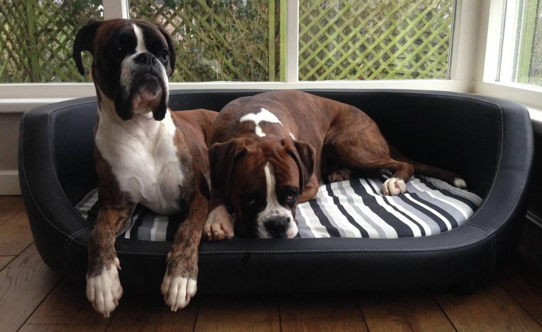 Oxford Sofás para perros