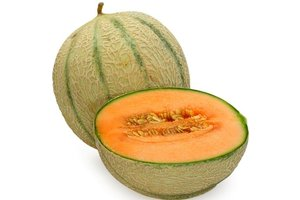 TPA Cantaloupe