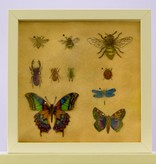 Insectenkastje