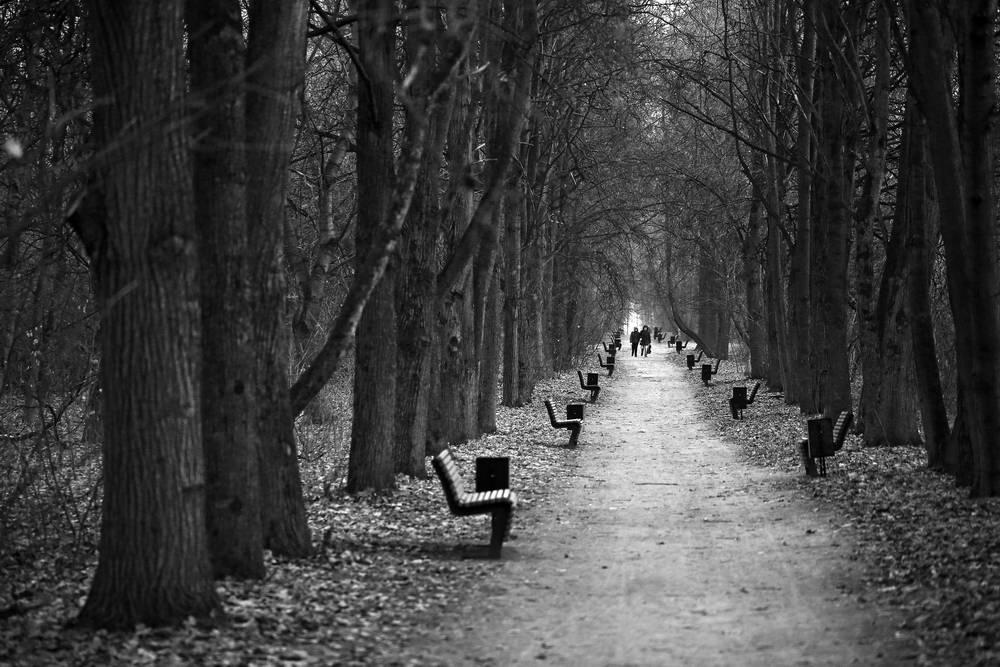 Andrey Lysikov Park