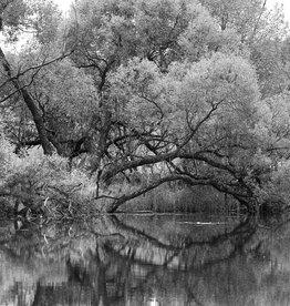 Andrey Lysikov Reflection