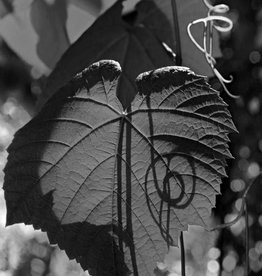 Andrey Lysikov Grape Leaf