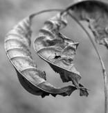 Andrey Lysikov Dried Leaf