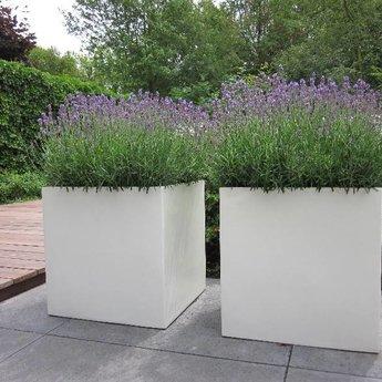 Buxus polyester 100x40x40 cm plantenbak