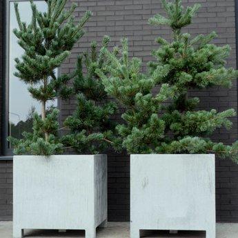 VADIM verzinkte plantenbak 60 x 60 x 60 cm