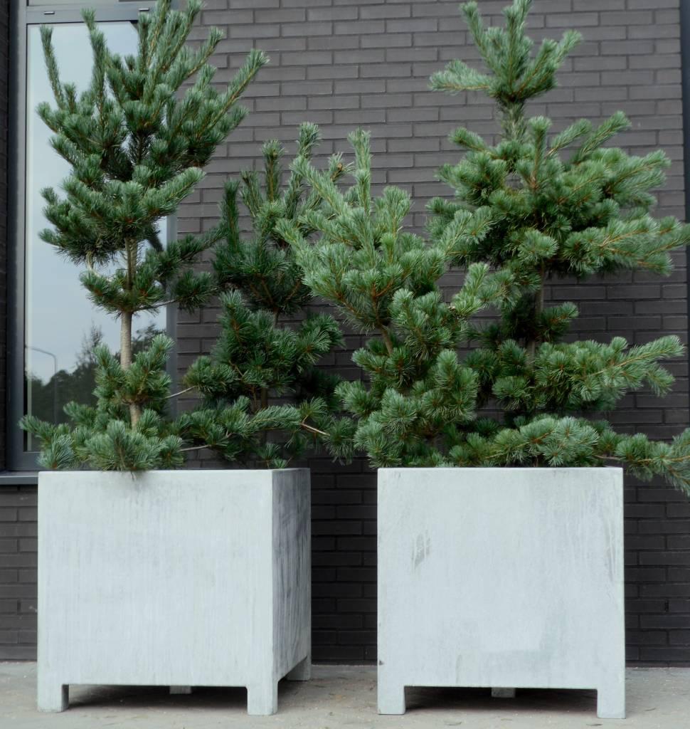 vadim verzinkte plantenbak 150 x 50 x 60 cm. Black Bedroom Furniture Sets. Home Design Ideas