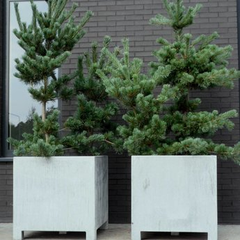 VADIM verzinkte plantenbak 120 x 50 x 60 cm