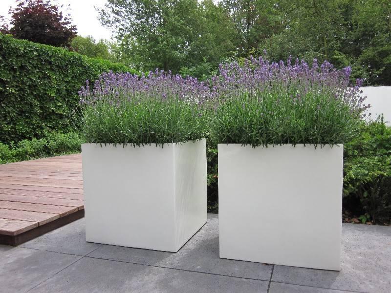 Polyester bloembakken en plantenbakken - Scheiding houten ...
