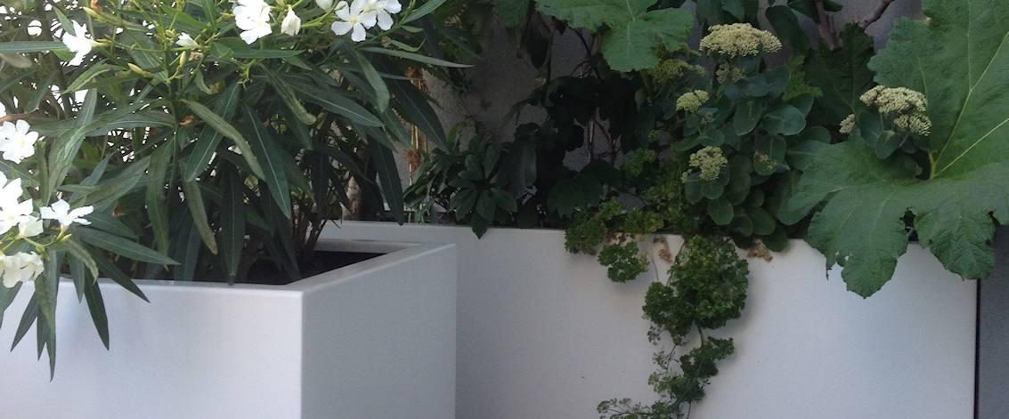 Grote Potplanten Voor Buiten.Bloembakken Voor Buiten Tuinvoordeel Eu