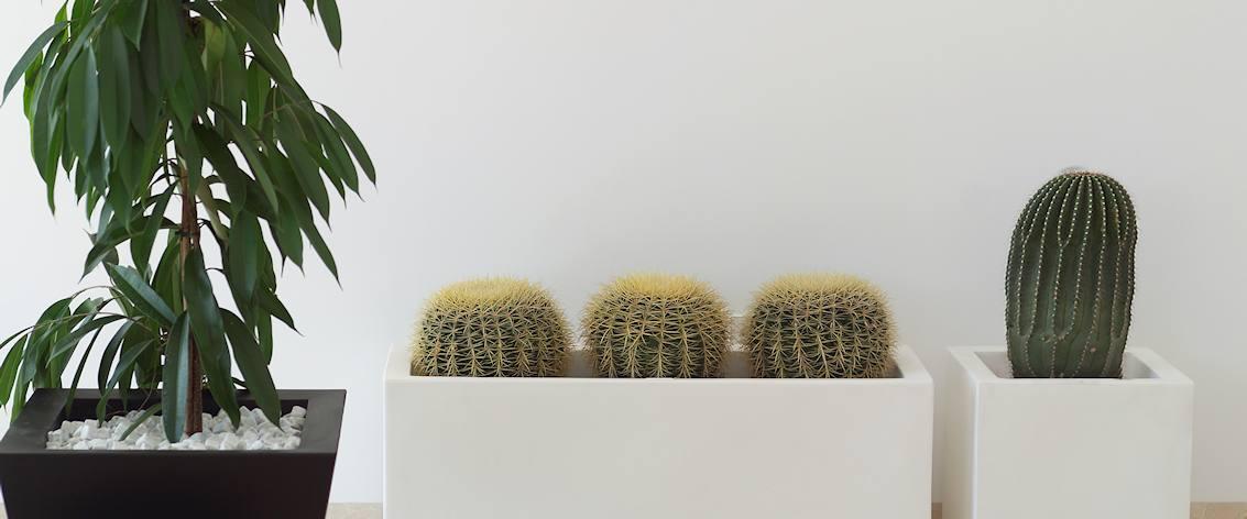 Grote Hoge Plantenpot.Grote Bloembakken Tuinvoordeel Eu
