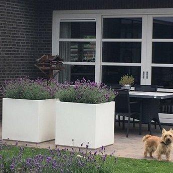Buxus polyester 140x140x60 cm plantenbak