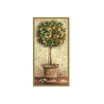 Schipper Citrus aurantium