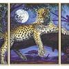 Schipper Afrika - Jager in de Nacht
