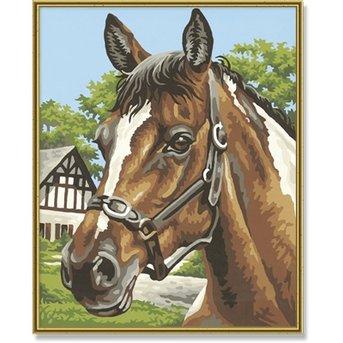 Schipper Horsehead