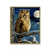 Schipper The eagle owl - Ruler of the Night